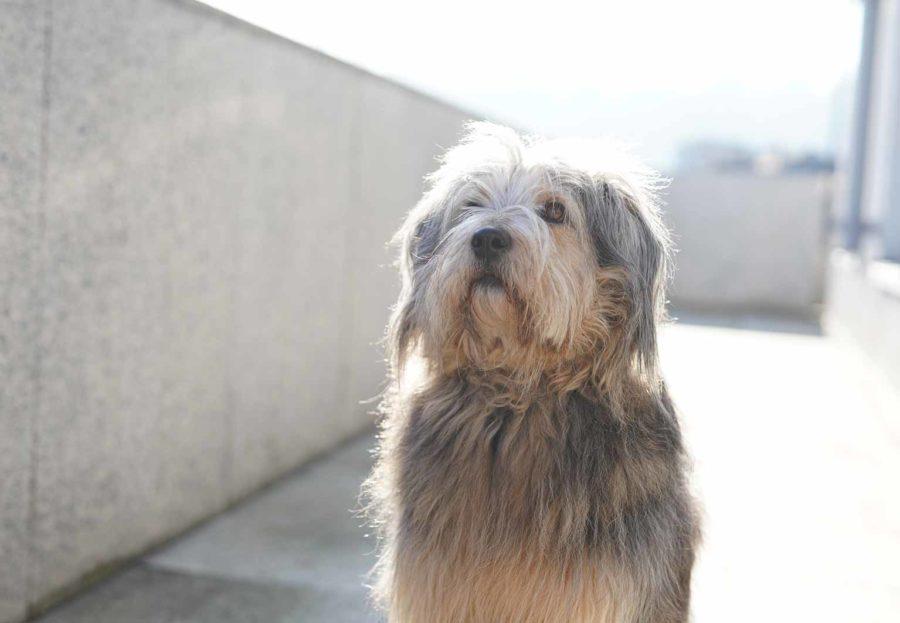 Hund Maya | Flauschmanagement